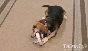 DogNatus ZacZac Dog Leash