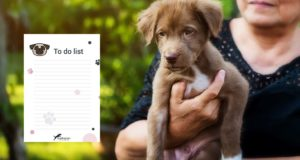 New Puppy Checklist - 15 Things You Must Do