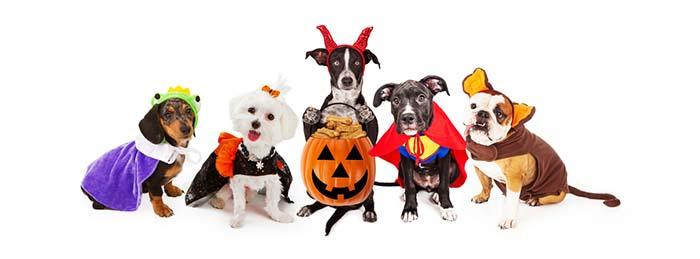 Participate in a Doggy Costume Contest