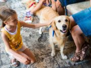 Therapy Dogs Reduce ADHD Symptoms in Kids Study Shows