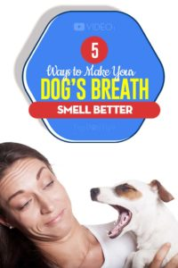 Tips on How to Make a Dog's Breath Smell Better