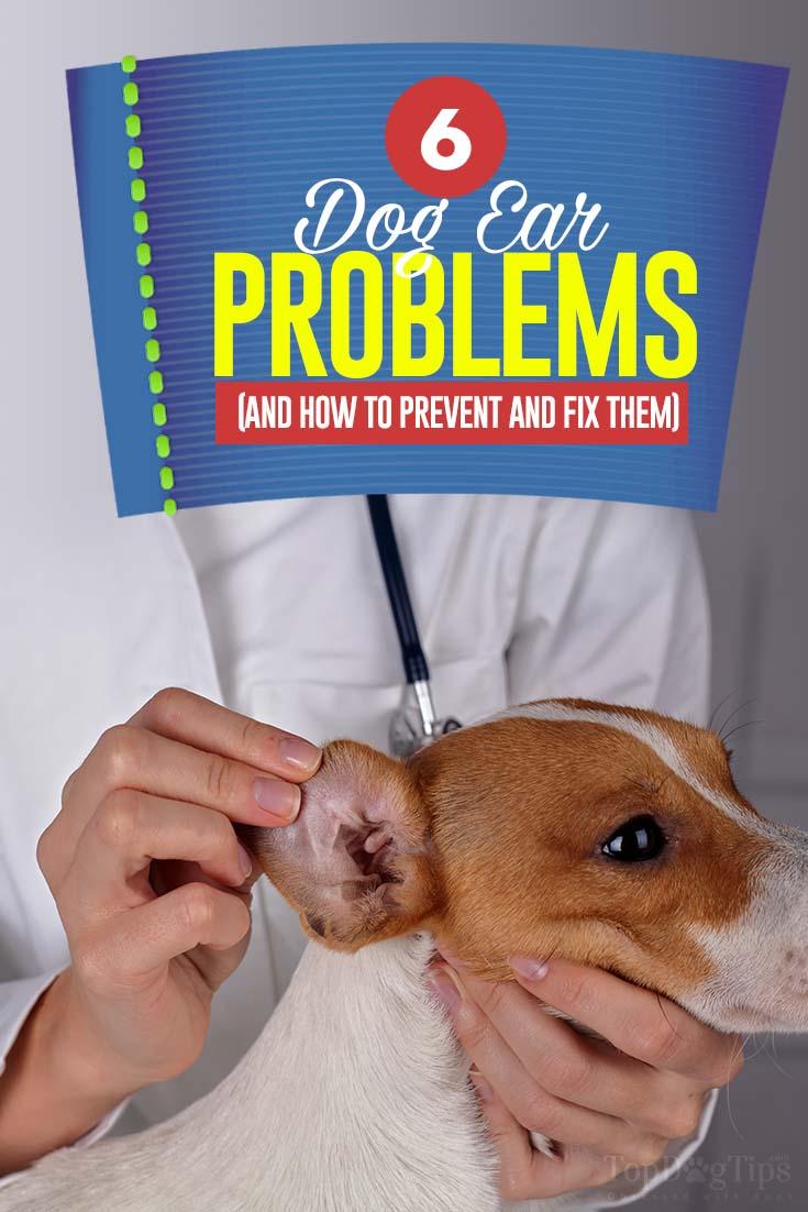 dog ear problems - 735×1102
