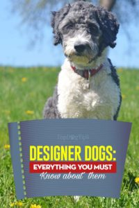 What are Designer Dogs - What You Must Know
