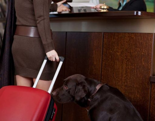 10 Questions to Ask Before Bringing Your Dog to a Hotel