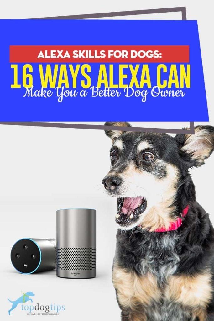 16 Ways Amazon Alexa and Echo Helps Dog Owners