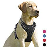 BARKBAY Harness