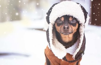 50 Best Dog Winter Clothes