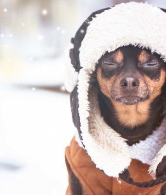 50 Best Dog Winter Clothes
