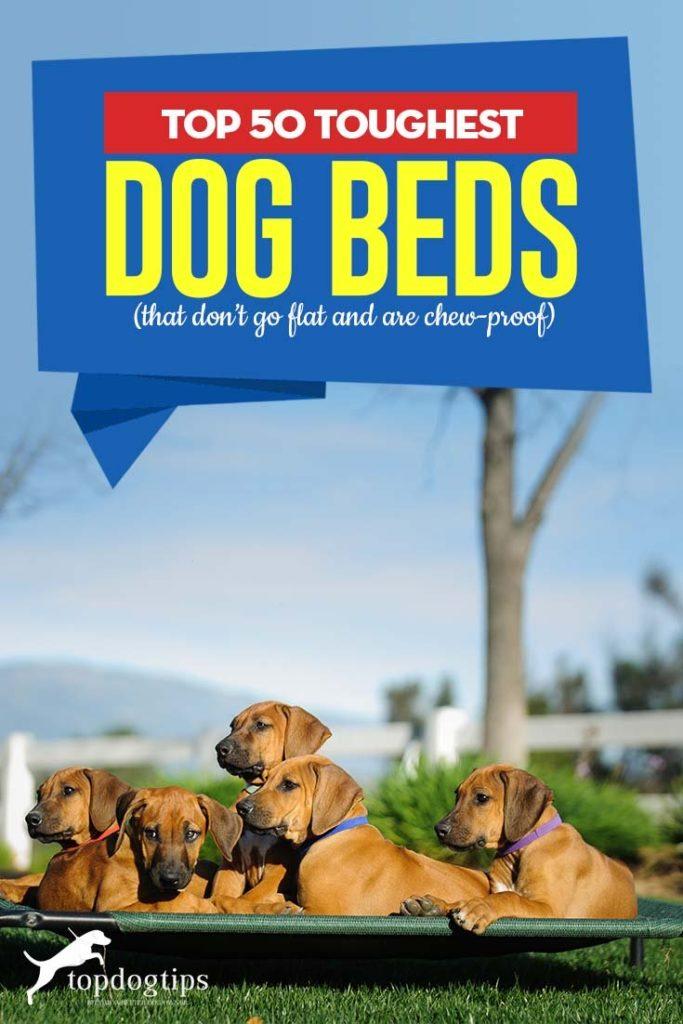 50 Top Rated Tough Dog Beds