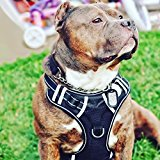 Big Dog Harness No Pull Adjustable Vest