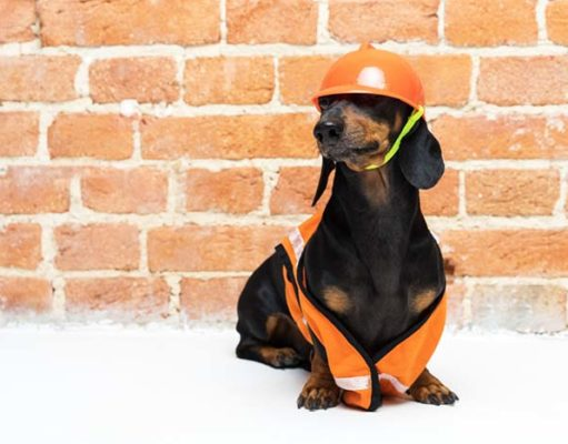 8 Jobs That Dogs Would Be Awesome At
