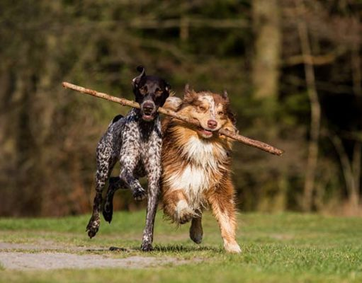 8 Tips for Your First Doggie Play-Date