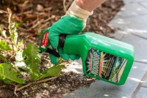 A herbicide Glyphosate, developed and used on farms, gardens and yards in the U.S. since 1974 is apparently included in some other products as well, including pet food.