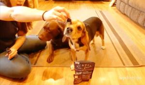Austin and Kat CBD Dog Treats & CBD Oil for Pets Review