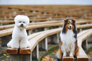 Consider dogs coat
