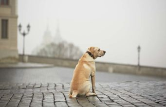 How to Find a Missing Dog - 8 Things You Must Do Right Away