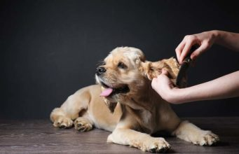 How to Keep a Dog Safe and Calm During Grooming and Cleaning