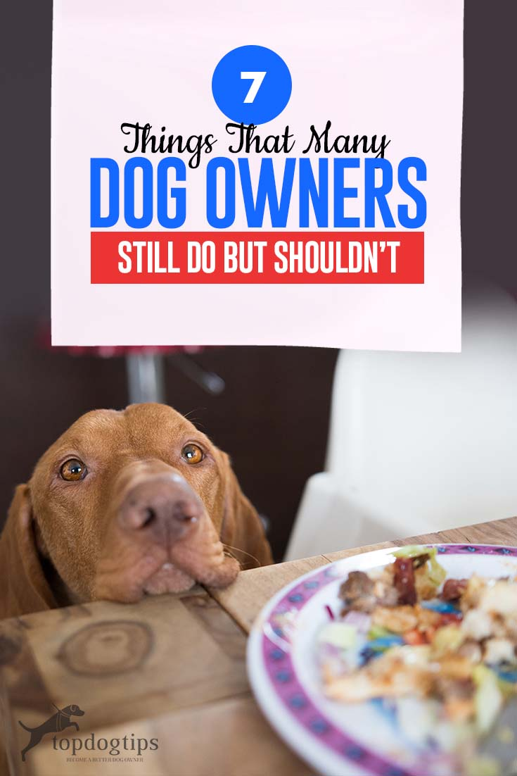 The 7 Things That Many Dog Owners Do But Shouldn't