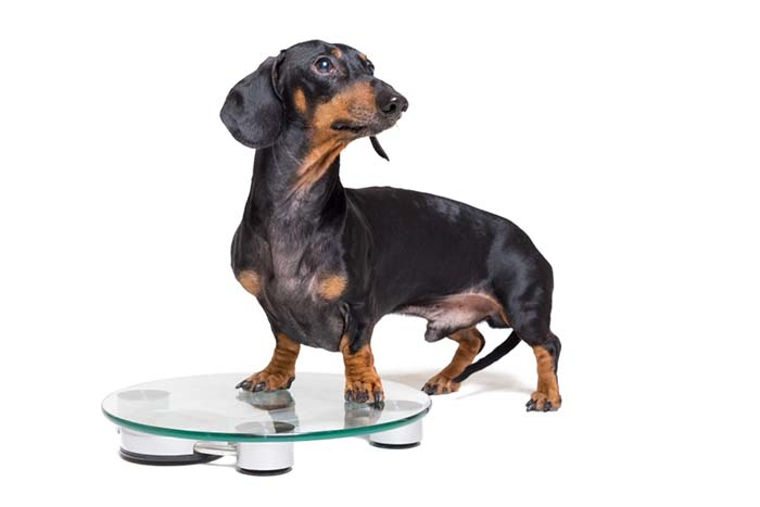 The 8 Weight Loss Supplements for Dogs