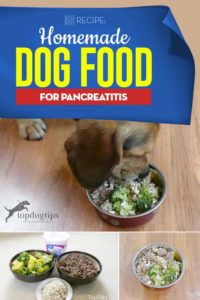 The Best Homemade Dog Food for Pancreatitis Recipe