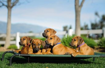 Top 50 Most Tough Dog Beds