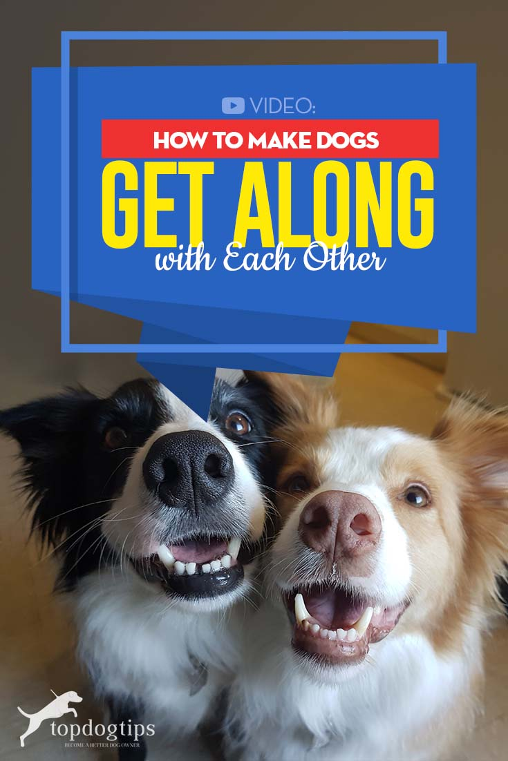 Video Guide - How to Make Dogs Get Along with Each Other