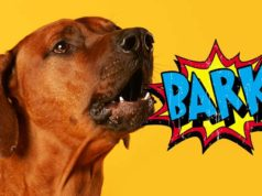 10 Reasons Your Dog Barks