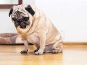30 Ways to Entertain a Bored Dog