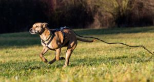 8 Tips on How to Train a Dog Not to Run Away and Safely Walk Off-leash