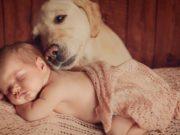 Dog Milk for Babies - Good or Bad