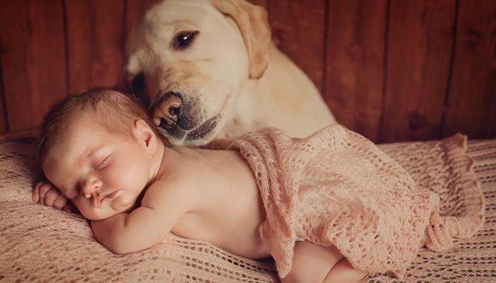 Dog Milk For Babies Good Or Bad