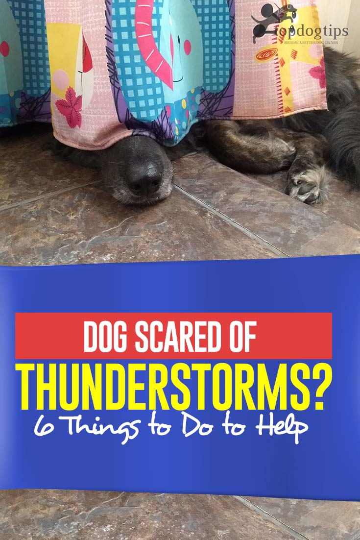 If Dog Scared of Thunderstorms - 6 Things to Do to Help