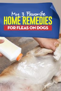 My 3 Favorite Home Remedies for Fleas on Dogs