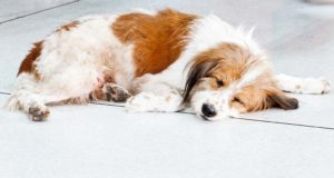 Signs and Treatment of Different Vitamin Deficiencies in Dogs