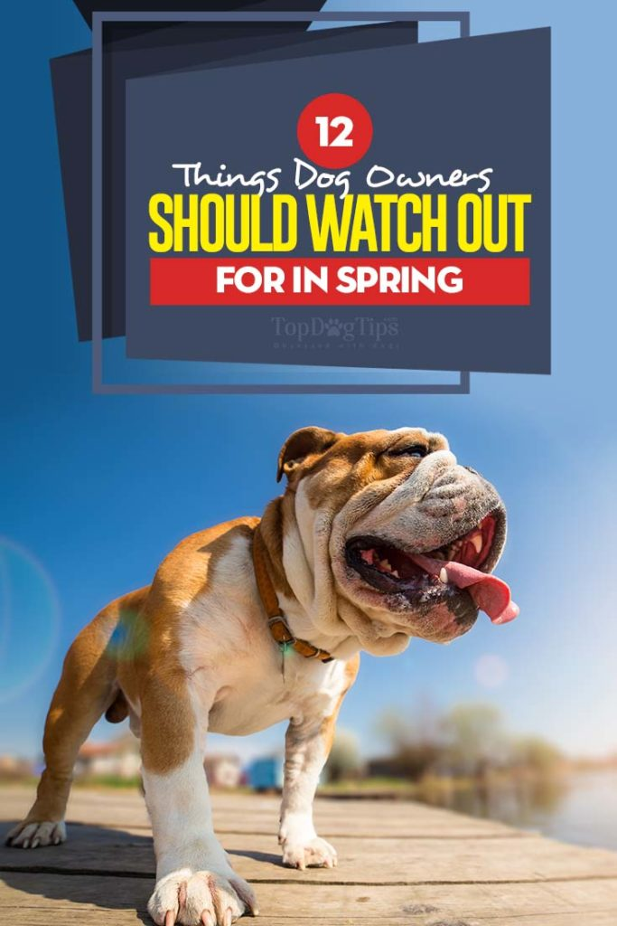 The 12 Things Dog Owners Should Watch Out for in Spring