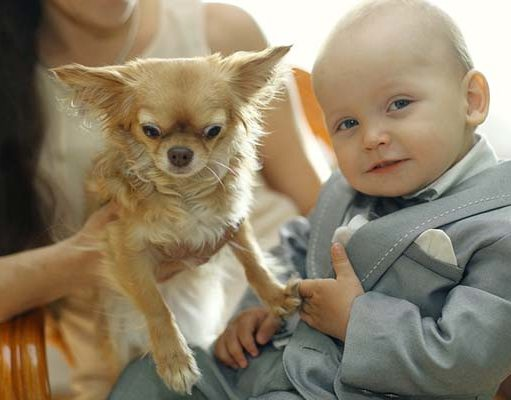 Your Dog Doesnt Like Kids - 5 Things You Can Do