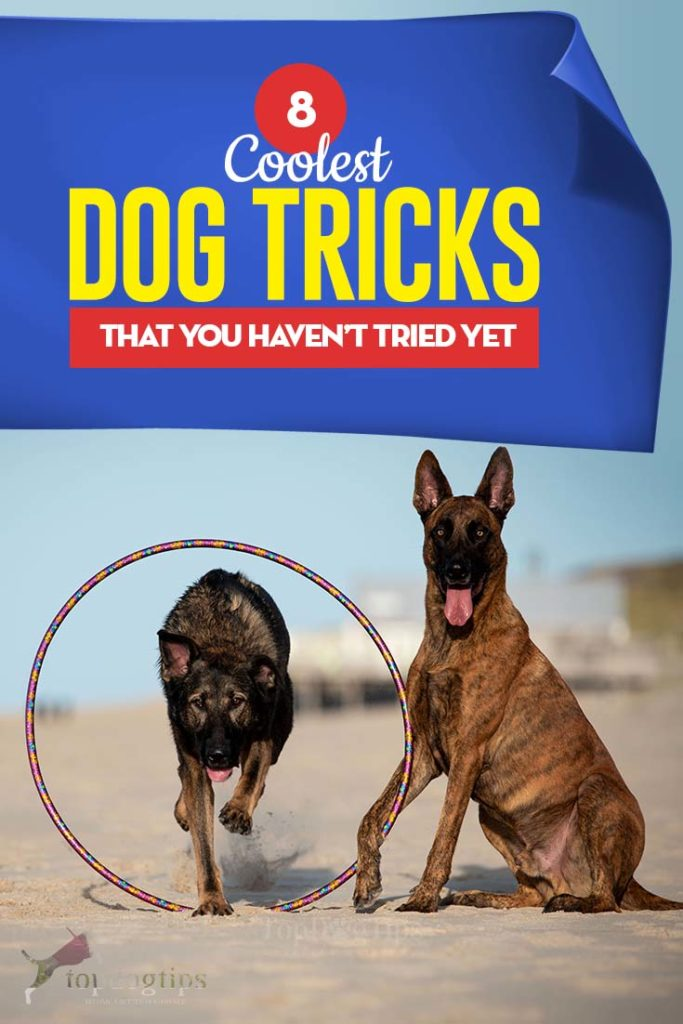 8 of the Coolest Dog Tricks That You Must Try Today
