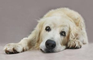 9 Neurological Problems in Dogs - How to Prevent and Fix Them