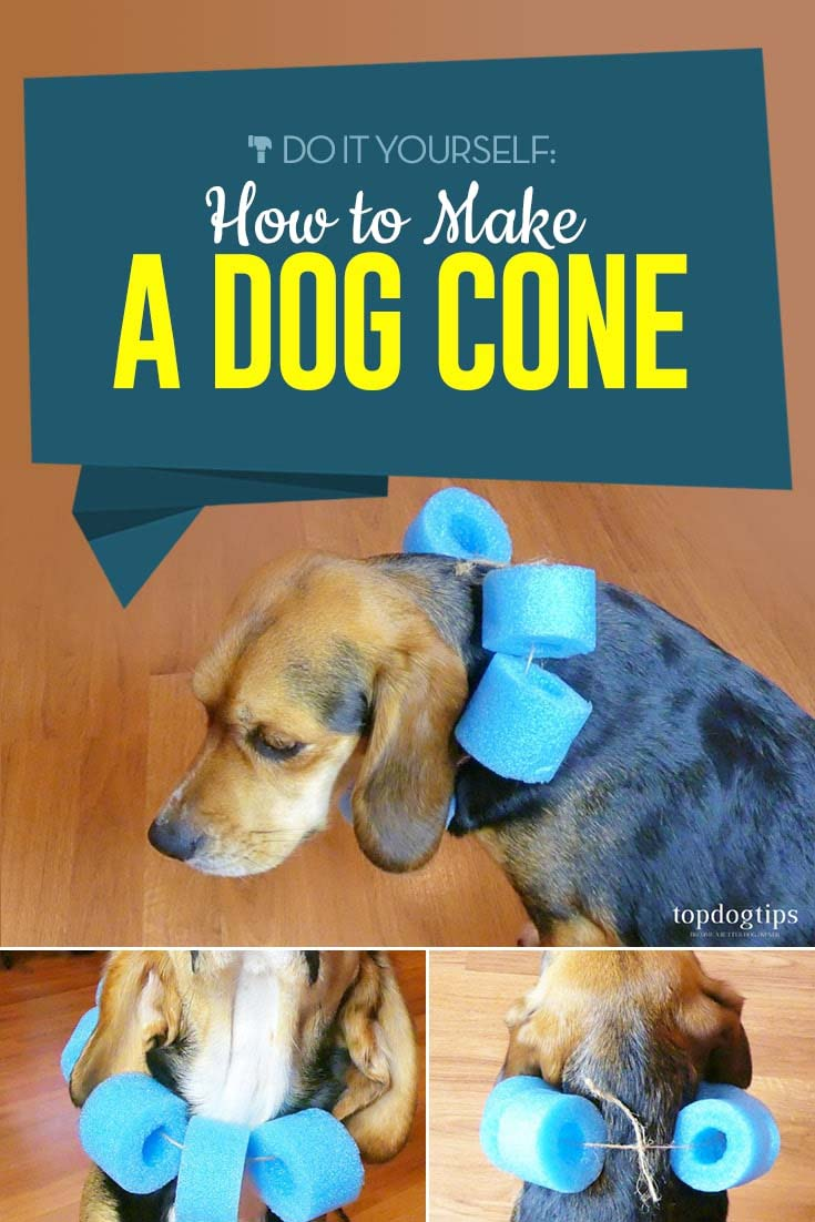 How to Make a Dog Cone - A Do It Yourself Guide