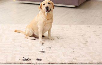 Mud, Dirt, Debris and Dog Walking - 8 Tips for Keeping Things Clean