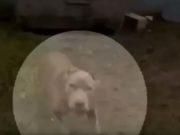 Patrolman Instantly Shoots and Kills Family's Dog, Calls It Self-Defense
