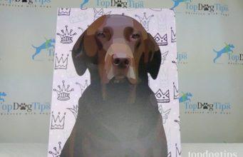 Personalize My Pup Pet Portrait Canvas Wrap