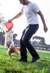 Play Frisbee