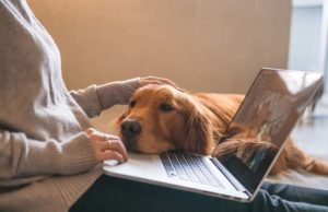 What's Wrong With My Dog - The 5 Best Symptom Checkers Online