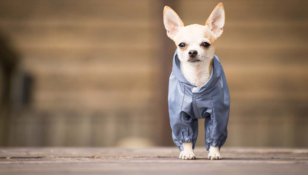 6 Small Dog Clothes That Your Pooch Needs