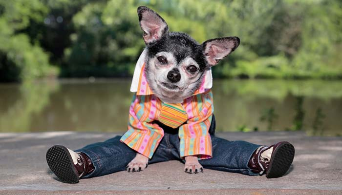 How to Choose the Right Clothing for Small Dogs