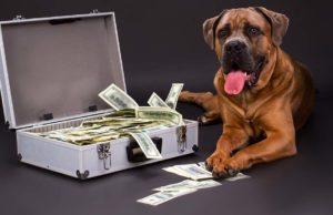 Lifelong Dog Care Costs Explained