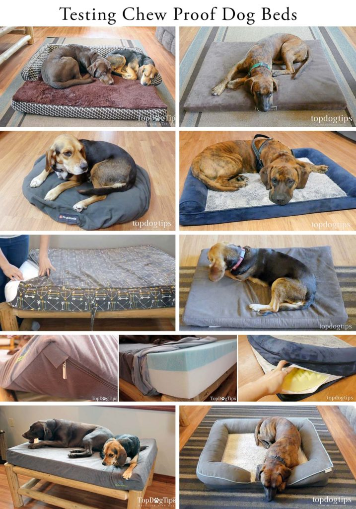 Testing chew proof dog beds