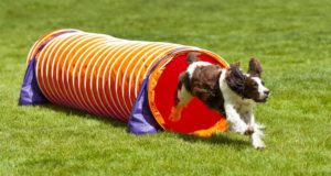 5 Best Dog Tunnel Brands for (Agility) Exercise