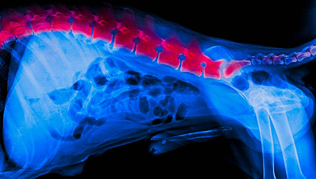 6 Signs of Back Problems in Dogs and What You Can Do About It